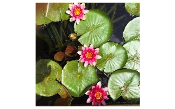 giardino con acqua