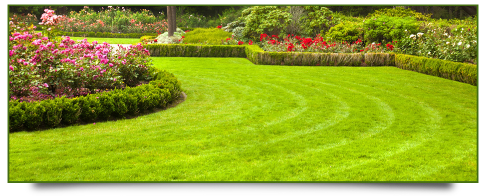 Professional gardener with landscaping expertise in for Professional landscaping service