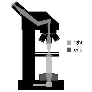 Microscope illustration by Simplified Science Publishing.