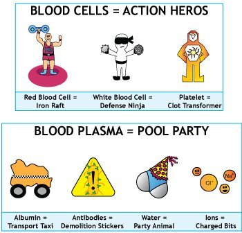 Red blood cell, white blood cell, and platlet, plasma, antibody illustration by Simplified Science Publishing.