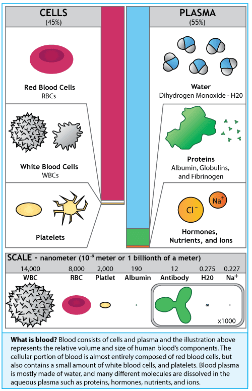 Human blood infographic by Simplified Science Publishing.