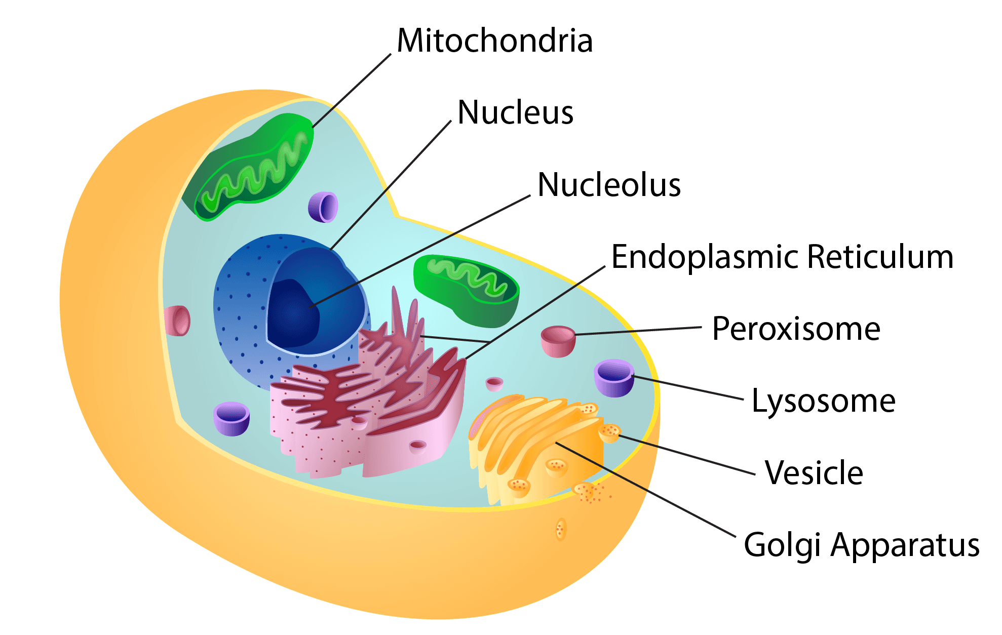Illustration of microRNA-218 function in the developing spinal cord.