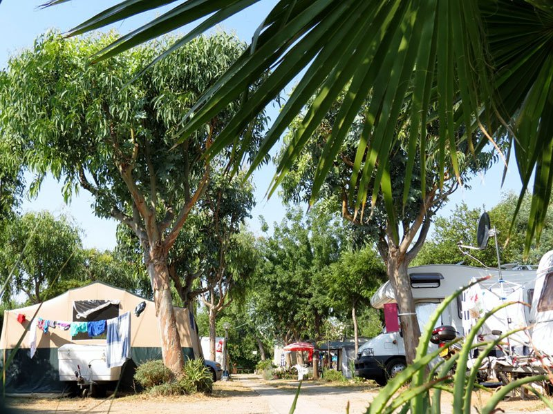degli alberi e dei camper