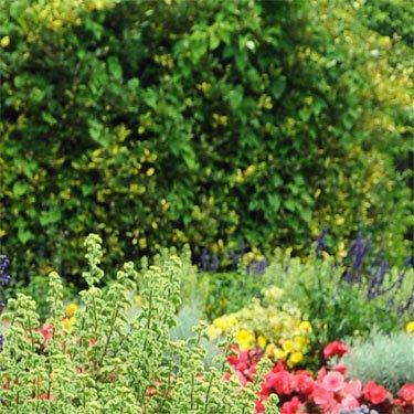 giardini con tante fiori