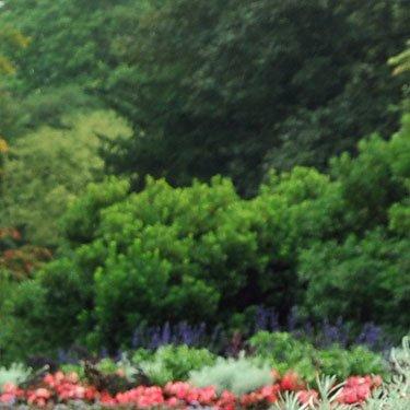 giardini con fiori rosa