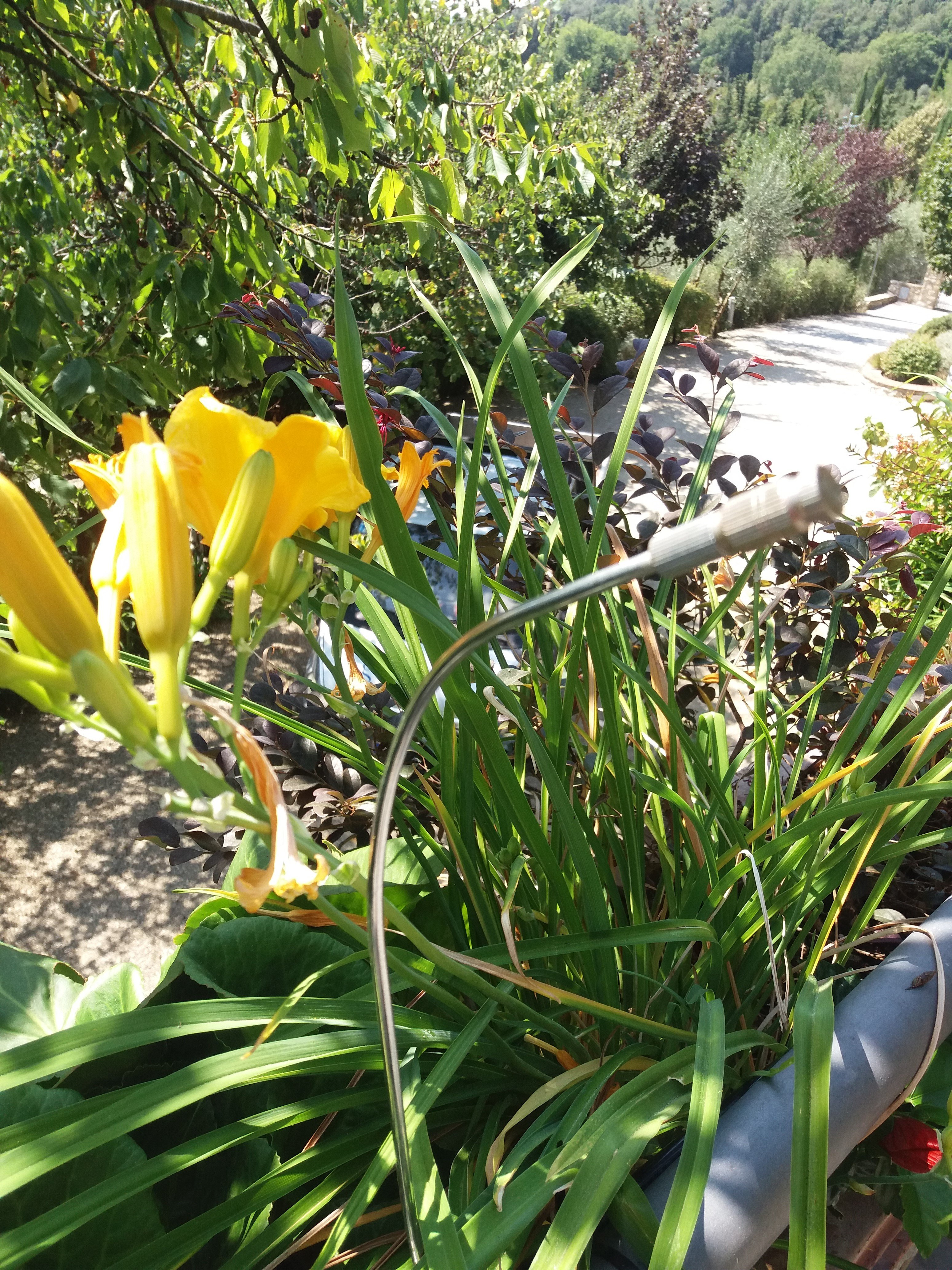 irrigatore davanti a fiori gialli