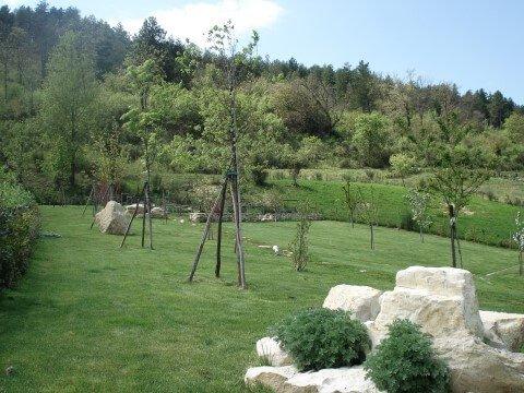 alberi con struttura in legno per crescere dritti