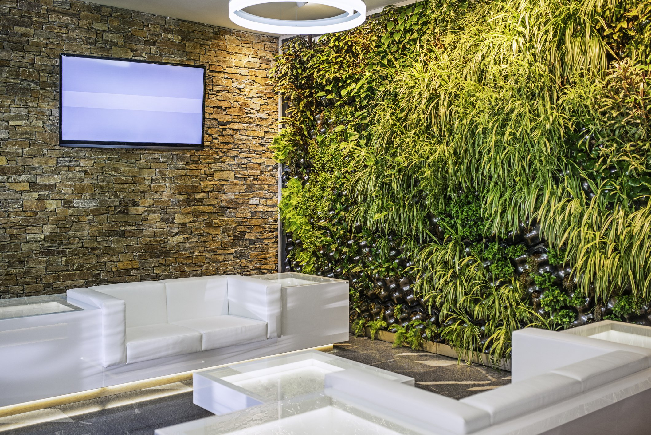 pianta a parete in sala d'aspetto