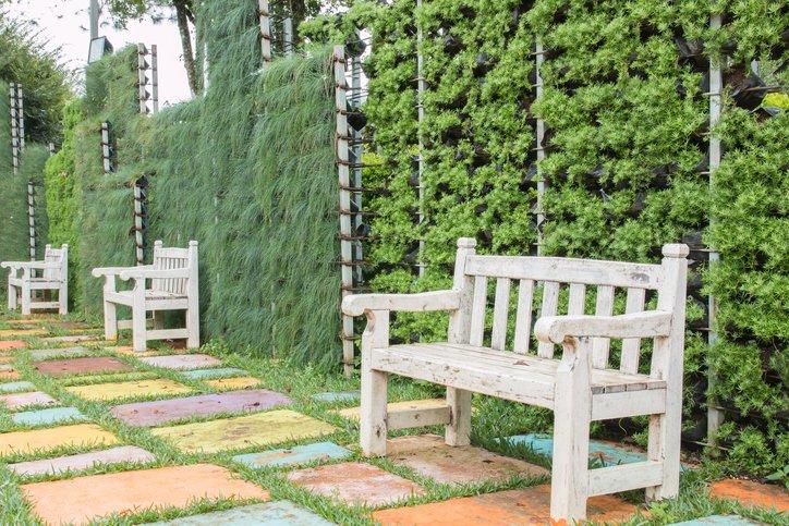 progettazione di edere e piante arrampicanti su facciata di palazzo