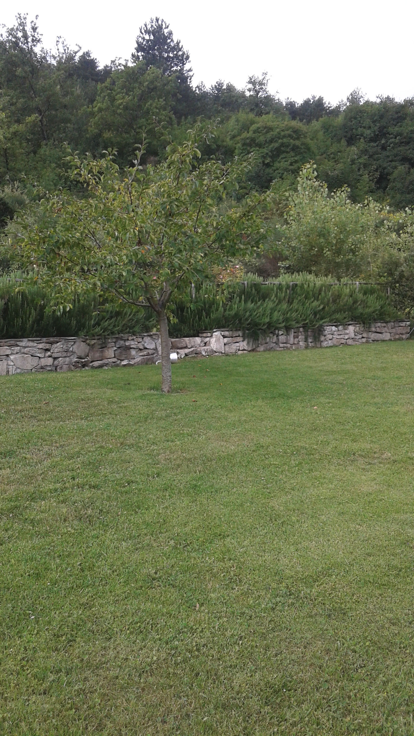 sezione di prato all'interno di giardino privato