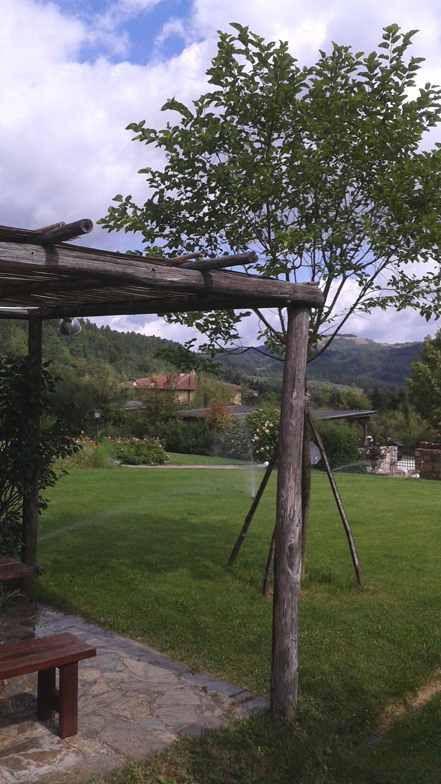 tettoia in legno in giardino