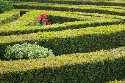 bushes in a garden