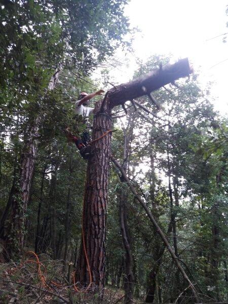 giardiniere mentre abbatte un albero