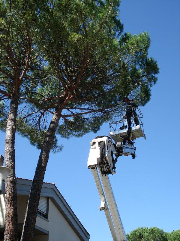 giardiniere su gru mentre pota un albero