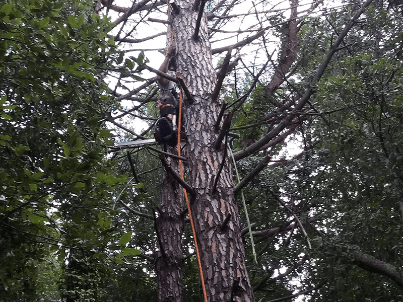 man coming down of a tree