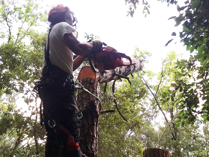man cutting a tree