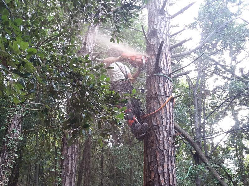 giardiniere con motosega mentre abbatte un albero