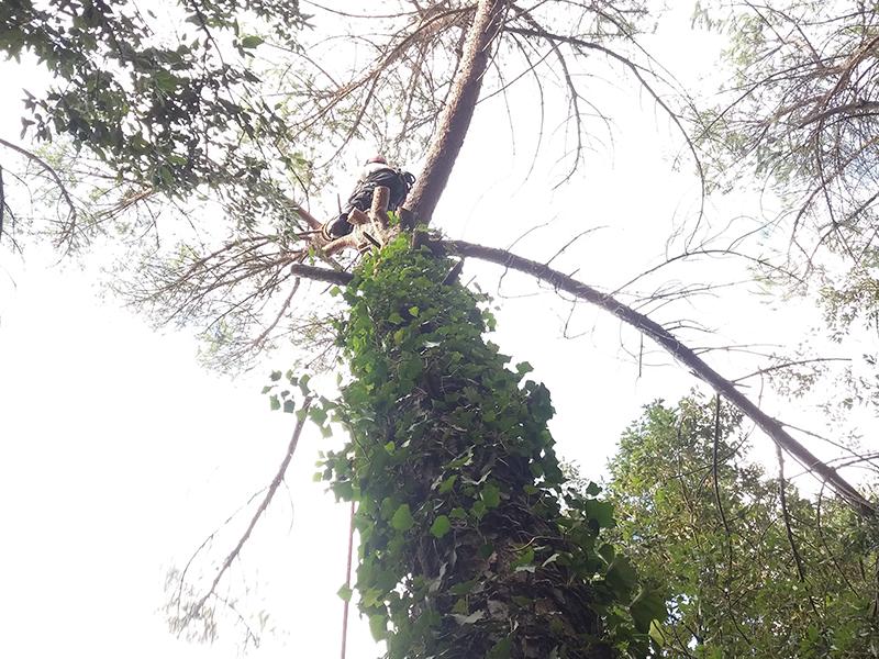 giardiniere in cima ad un albero