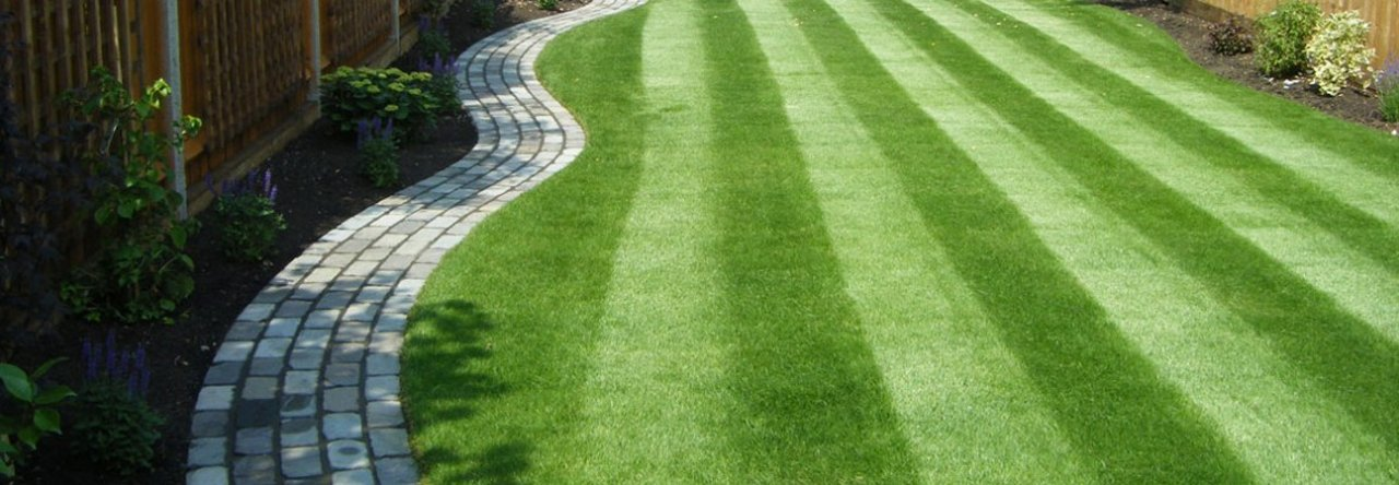 Well-manicured lawn