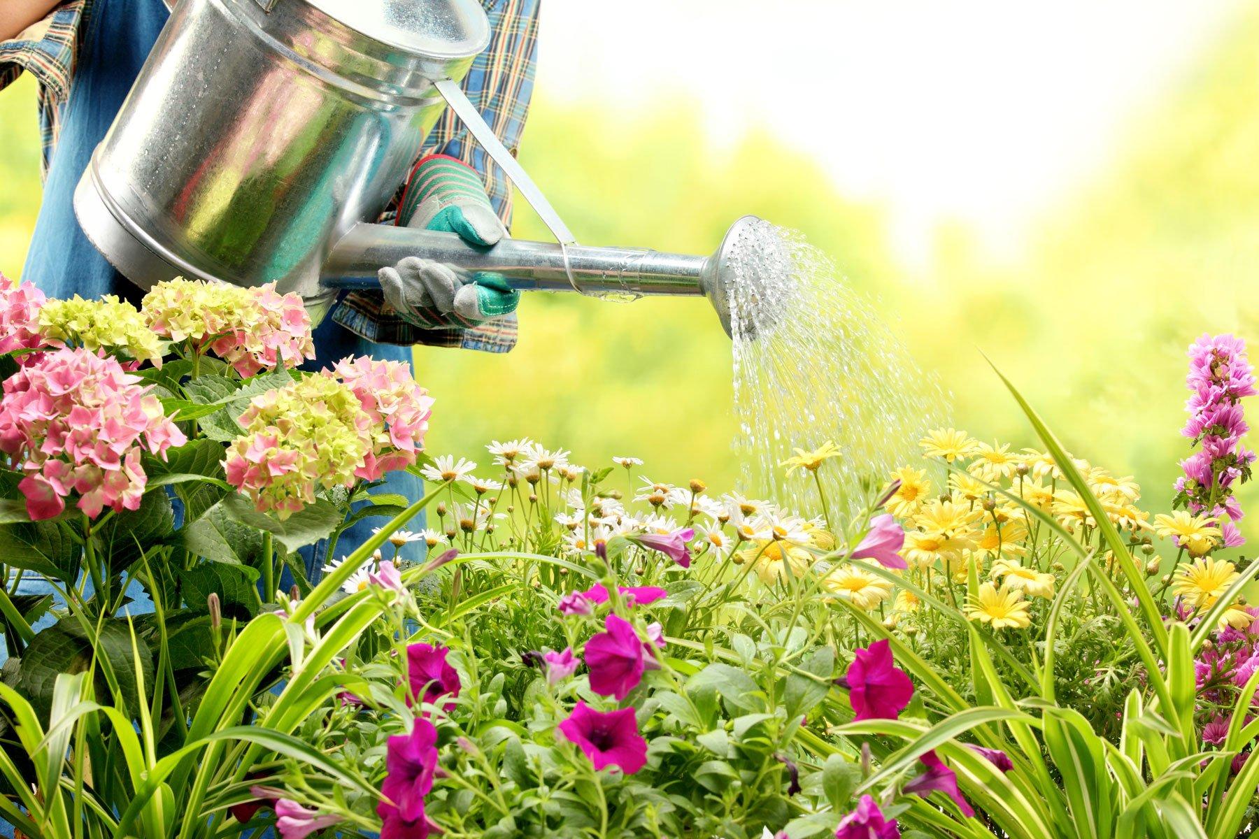 un giardiniere che annaffia dei fiori