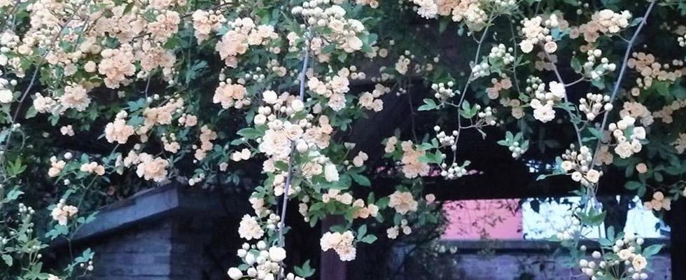 fiorista piccinini ravenna