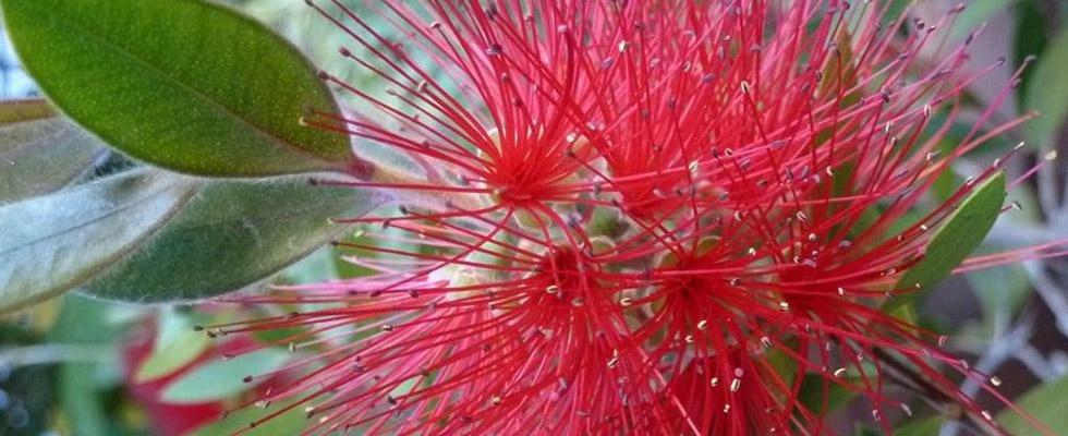 piante piccinini ravenna