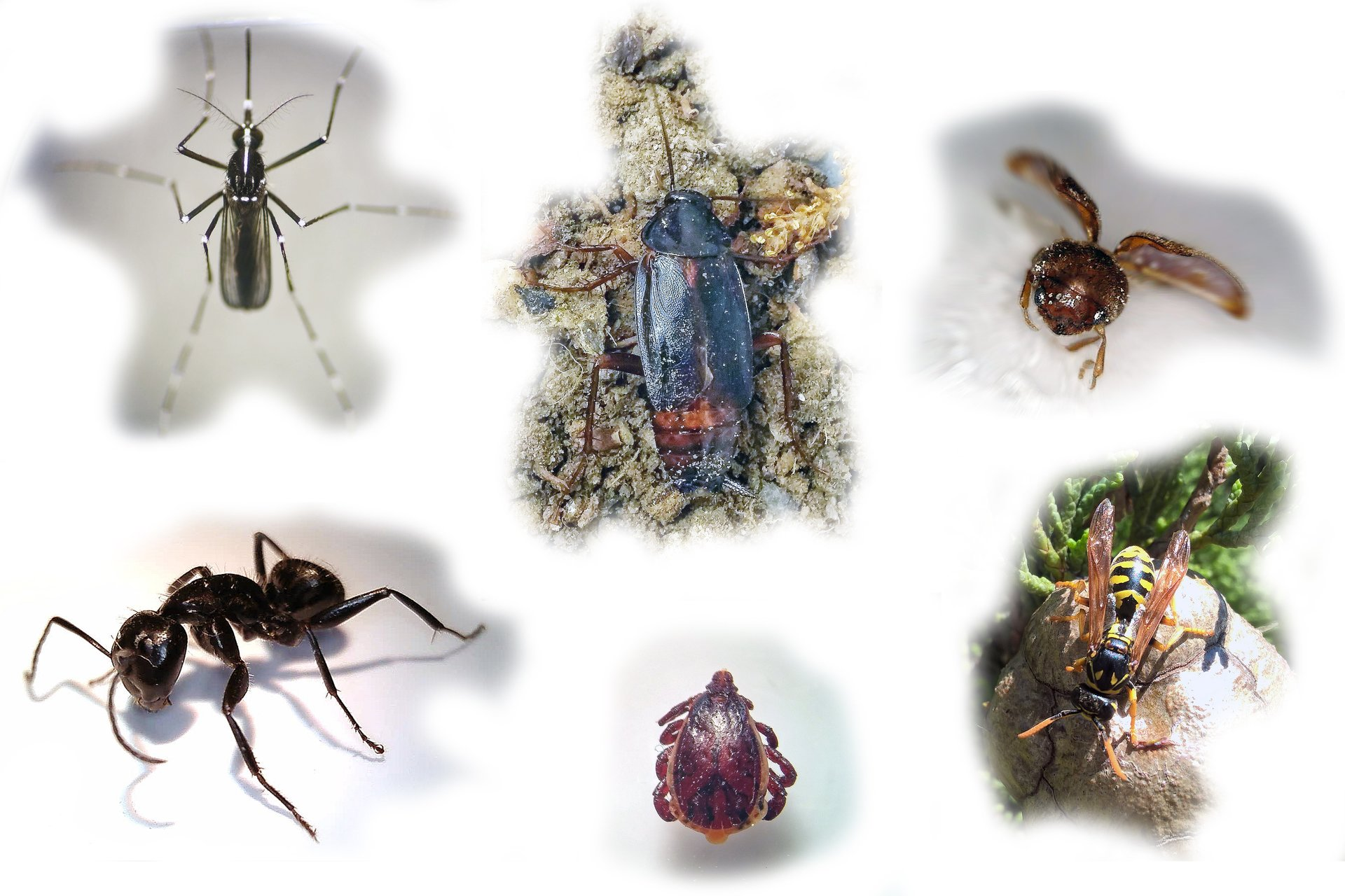Trattamenti insetti infestanti- Pisa - Entomox