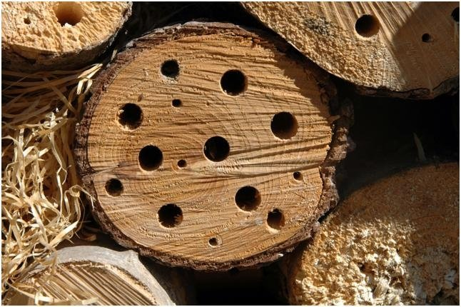 trattamento legno tarli