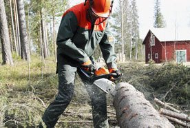 Tree work and stump grinding