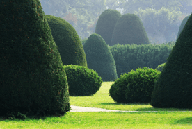 Hedge cutting in Berkshire