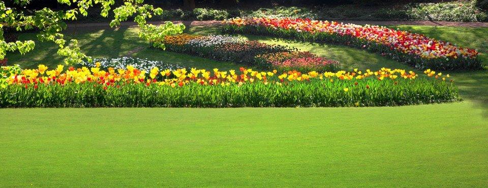 soft landscaping design