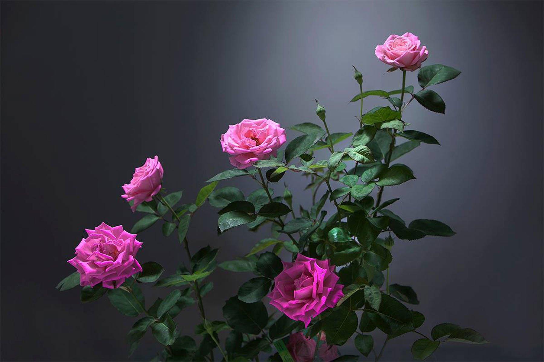 dei fiori viola