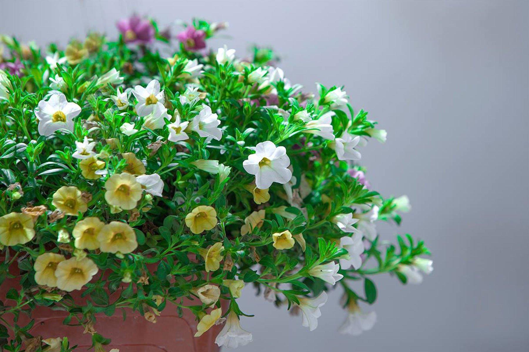 dei fiori gialli e bianchi