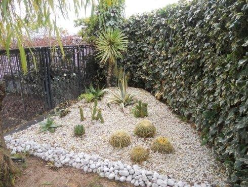 cactus misti