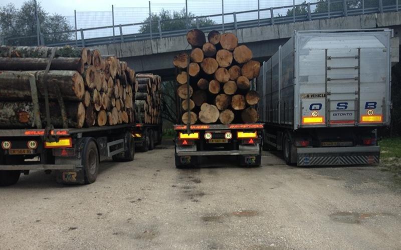 Vendita legname da ardere