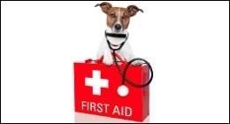 pronto soccorso animali, analisi, sverminazione