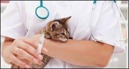 libretto sanitario, microchip, sverminare gatto