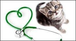 felini, gatto, vaccinare