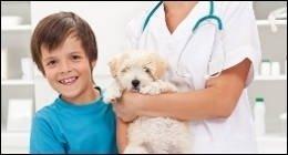 sterilizzare, cane, cucciolo