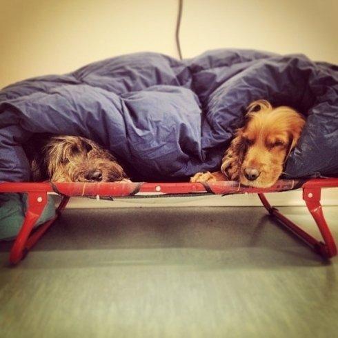 Nedo e Dora si riscaldano sotto le coperte