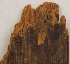 Damp problems - Glasgow - Bromac Ltd - Wood