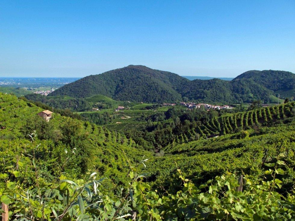 colline corbanese