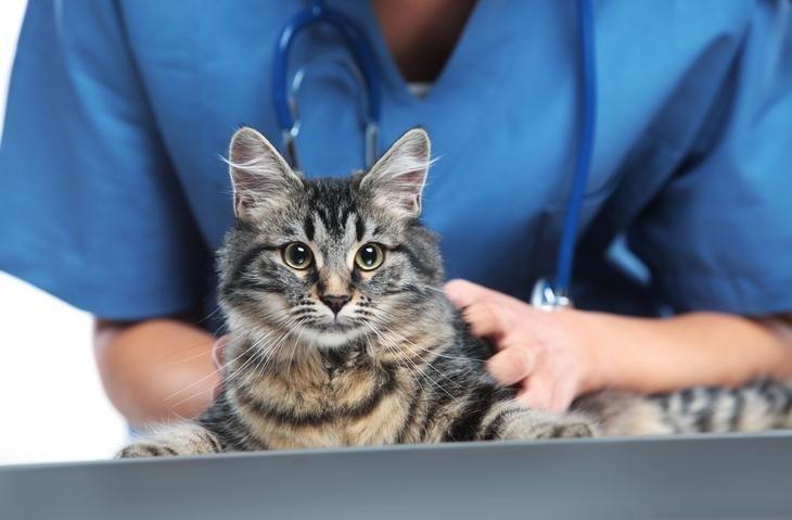 Servizi veterinari, Veterinaria