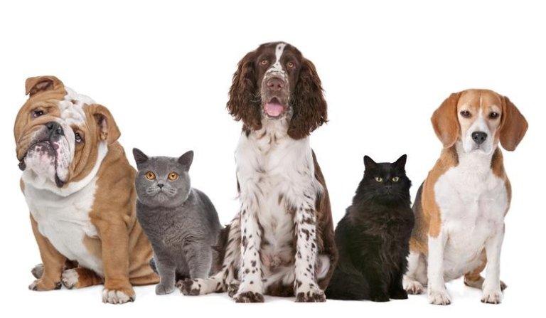 Cure per cani anziani,Gatti