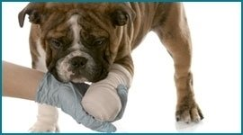 ortopedia per animali