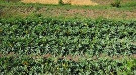 prodotti per l'infanzia biologici, prodotti agricoli biologici, alimenti macrobiotici