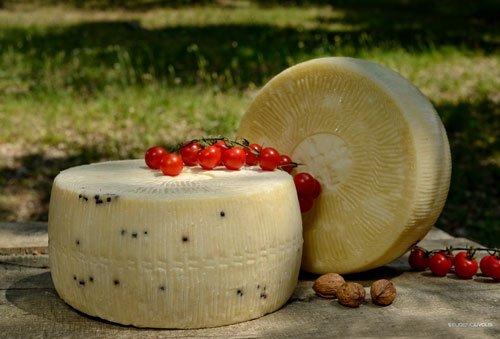 delle forme di formaggio e dei pomodori ciliegini