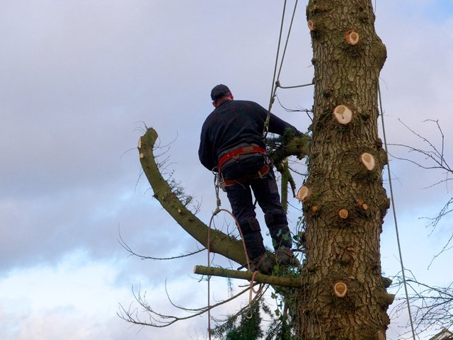 specialist tree work