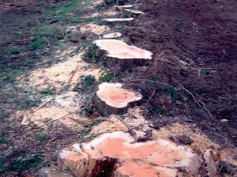 stump grinding specialists
