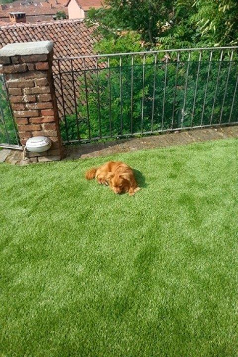 giardini pensili con erba sintetica